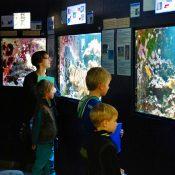 Visite guidée de l'aquarium de Bruxelles