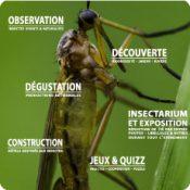 Exposition entomophagie