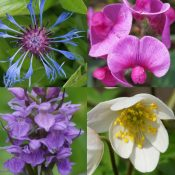 Relations Plantes-Insectes