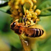 """Apprentis'Nature """"Les abeilles"""""""