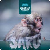 Vie et Culture des macaques japonais