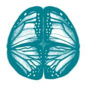 Le cerveau, des cellules extraordinaires mais pas immortelles