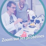[Annulé] Zoom sur les protéines