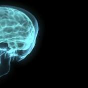 Matinée scolaire dans le cadre de la Semaine internationale du Cerveau